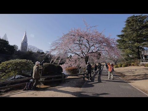 【4K】Shinjuku gyoen videowalk in the end of February