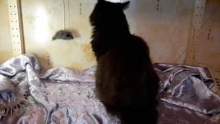 видео Котёнок ест растения, опасно ли это?
