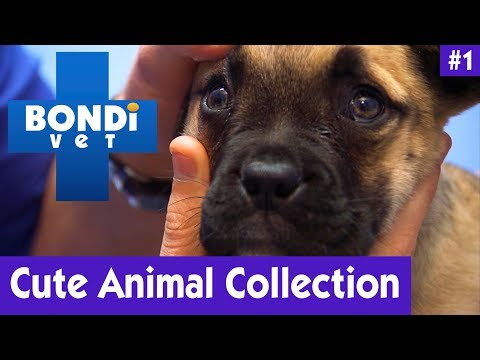 CUTE ANIMAL COLLECTION #1   Bondi Vet