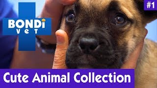 CUTE ANIMAL COLLECTION #1 | BONDI VET