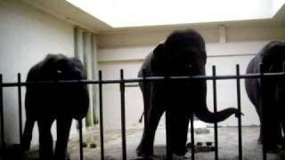 hot sex naked girls elephants drunk