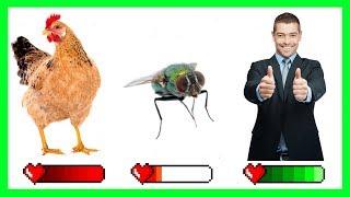Kto ma najgorzej: KURA, MUCHA, czy CZŁOWIEK?