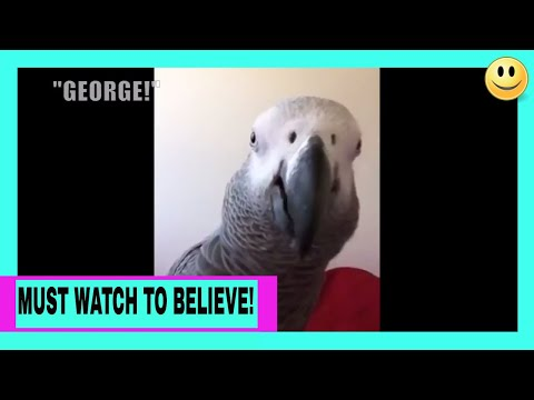 AMAZING VIDEO of My African Grey Parrot Talking To Himself In A Selfie Video