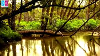 Yoga Music for Hot Stone Massage with Zen Spa Music