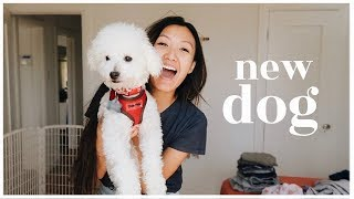 our-new-family-dog-wahlietv-ep687