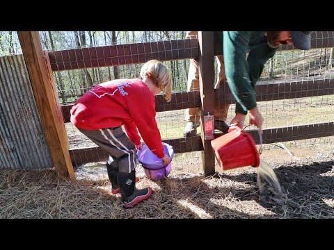 Got BIG Help With The Morning Farm Chores (The Farm Life)