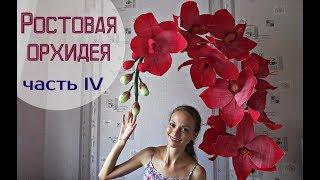 Большие цветы | Ростовые орхидеи. Часть 4