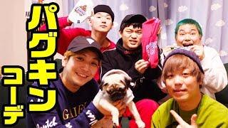 パグキンさんに似合う服コーデ対決!!【へきトラ】 thumbnail