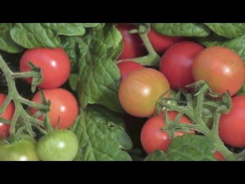 Cultivar limoneros en maceta verano 2016 doovi - Como plantar frutales ...