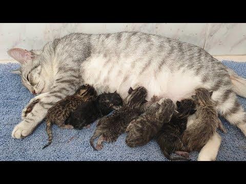 Impressive vivid scene of giving birth to six kittens.