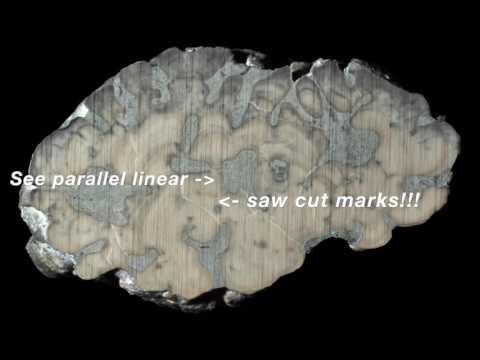 Cutting & Polishing Fossils with Jack Kallmeyer of the Cincinnati Dry Dredgers