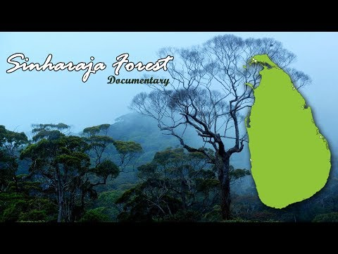 Sinharaja Forest Documentary