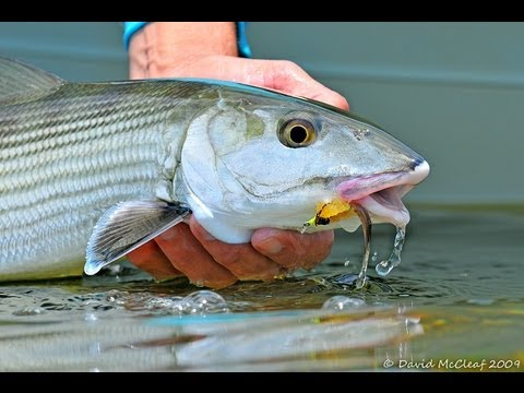 IN THE KEYS | World Record Bonefish