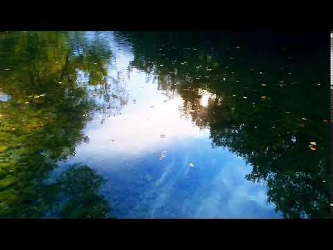Reflets solaires sur eau claire de rivière dans forêt luxuriante