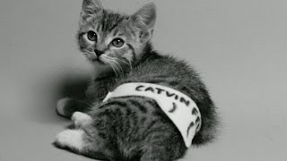 Justin Bieber - My Calvins (Cute Kitten Version) - Calvin Klein