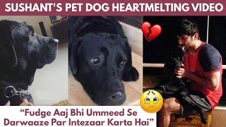 Sushant Singh Rajput Pet Dog Fudge's Emotional Video, Waiting For Sushant To Comeback