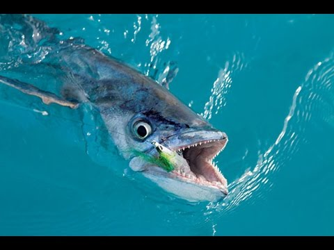 Gulf Coast's Sportsman Seminar Series: King Mackerel