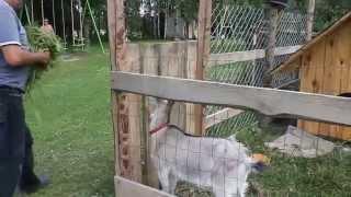 Zwierzęta w gospodarstwie agroturystycznym - Zabuże