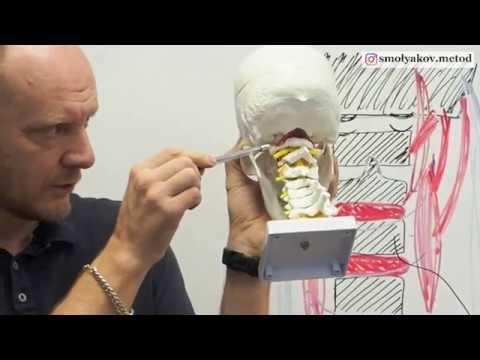 Сосудистые нарушения в области шеи | причина и лечение