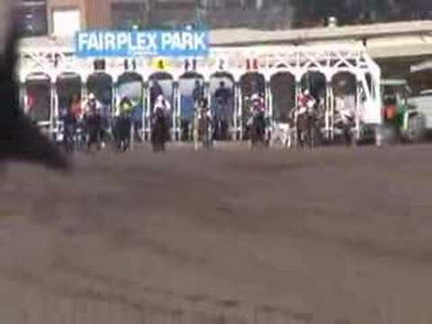 Mule race