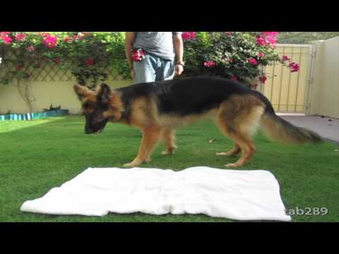 How To Train A Dog To Settle Down / Relax