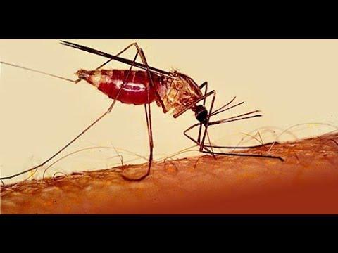 اليوم العالمي للملاريا بعنوان.. مستعدون لدحر الملاريا  - 21:22-2018 / 4 / 25