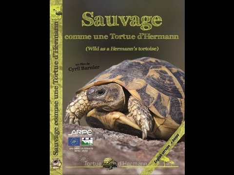 Sauvage comme une Tortue d'Hermann – Film documentaire Life [version longue]
