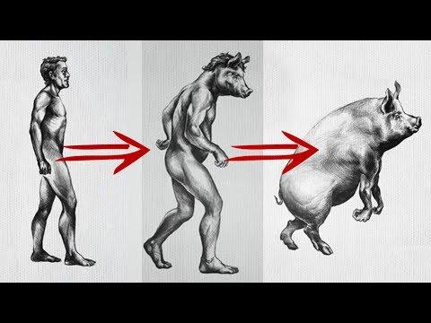 Все животные произошли от человека!