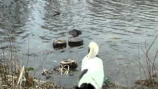 Nature: Уходим вправо. Природа Чернигова. Озёра.(3)(Образовалось много озер которые раньше были одним водоемом., 2016-03-20T08:22:07.000Z)