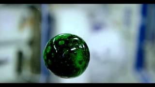 A Live Alien? No Just A Colorful Zero-G Fizzy Blob | 4K Video