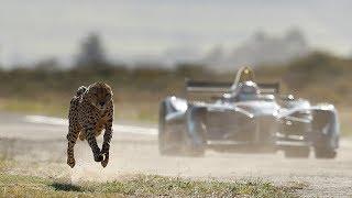 Beschleunigungs-Duell gegen Klimawandel: Gepard vs. Formel-E-Flitzer