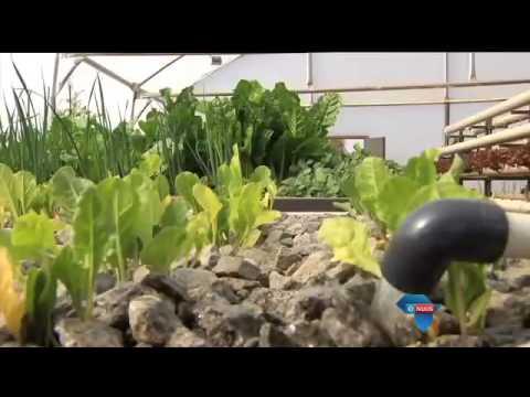 Tiener boer met groente en visse / Teenager farms with vegetables and fish