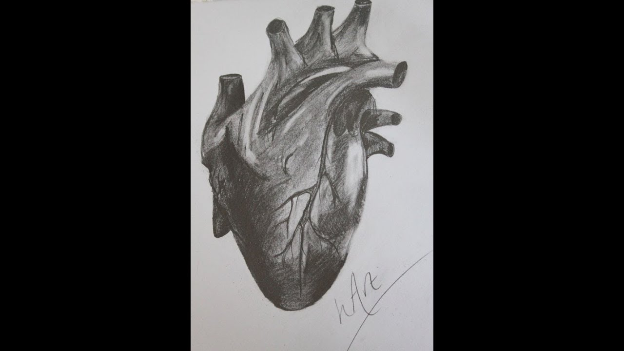 Human heart detailed graphite drawing art time lapse heather curtis art youtube