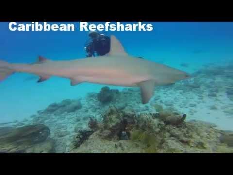 Bahamas Diving Fish Tales