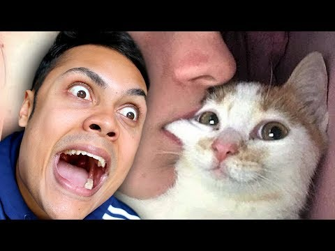 REACTING TO CUTE FUNNY CAT VIDEOS (TRY NOT TO SMILE)