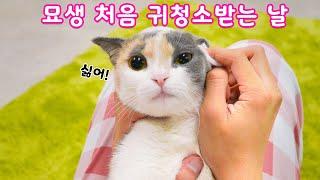 아기고양이 귀청소하다 죽을뻔..심쿵사 | 고양이산책