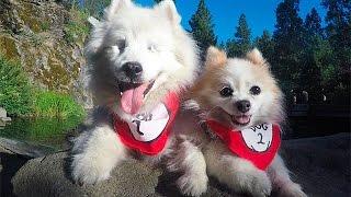 「ボクがキミの目に」病気で両目を失った犬 彼の側にはいつも小さな友達...
