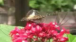 Парк бабочек. Сингапур(Парк бабочек. Сингапур., 2008-08-21T08:50:23.000Z)