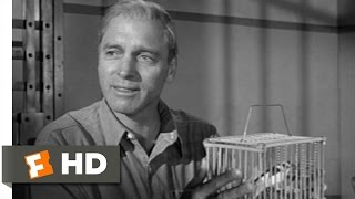 Birdman of Alcatraz: Going Into Business thumbnail