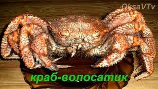 Как готовить краба. Как разделать краба. Краб-волосатик. How to cook crab. Crab-hair-worm.