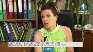 Бесплатная стерилизация бездомных животных в Одессе