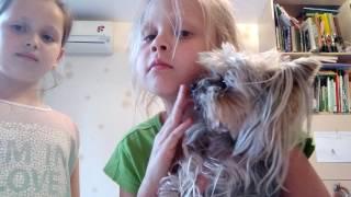 Обзор на собаку крошу