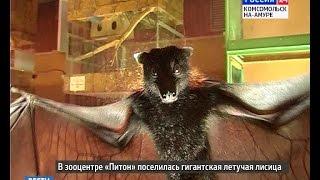 Летучая лисица (запись с эфира 30 ноября)