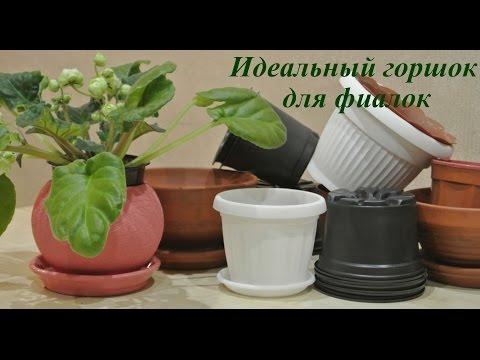 Фиалки Идеальный горшок для фиалок violets pot of violets