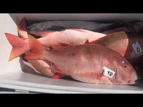 Yankee Capts Fishing Trip 2019 ( Fish Distribute )