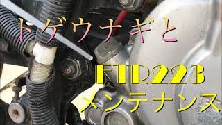 【アクアリウム オートバイ】トゲウナギとオートバイ メンテ