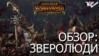 total War: Warhammer Зверолюди   Обзор