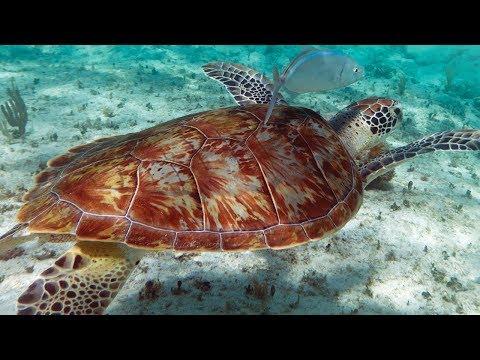 Mexico Sea Turtle Sanctuary: Wonderous World Chapter 4