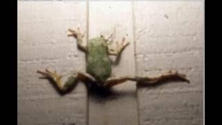 Video Frog eats praying mantis download MP3, 3GP, MP4, WEBM, AVI, FLV Desember 2017