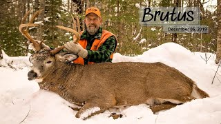 The Story of BRUTUS | A Monster Maine Buck Tracked Down By HAL BLOOD